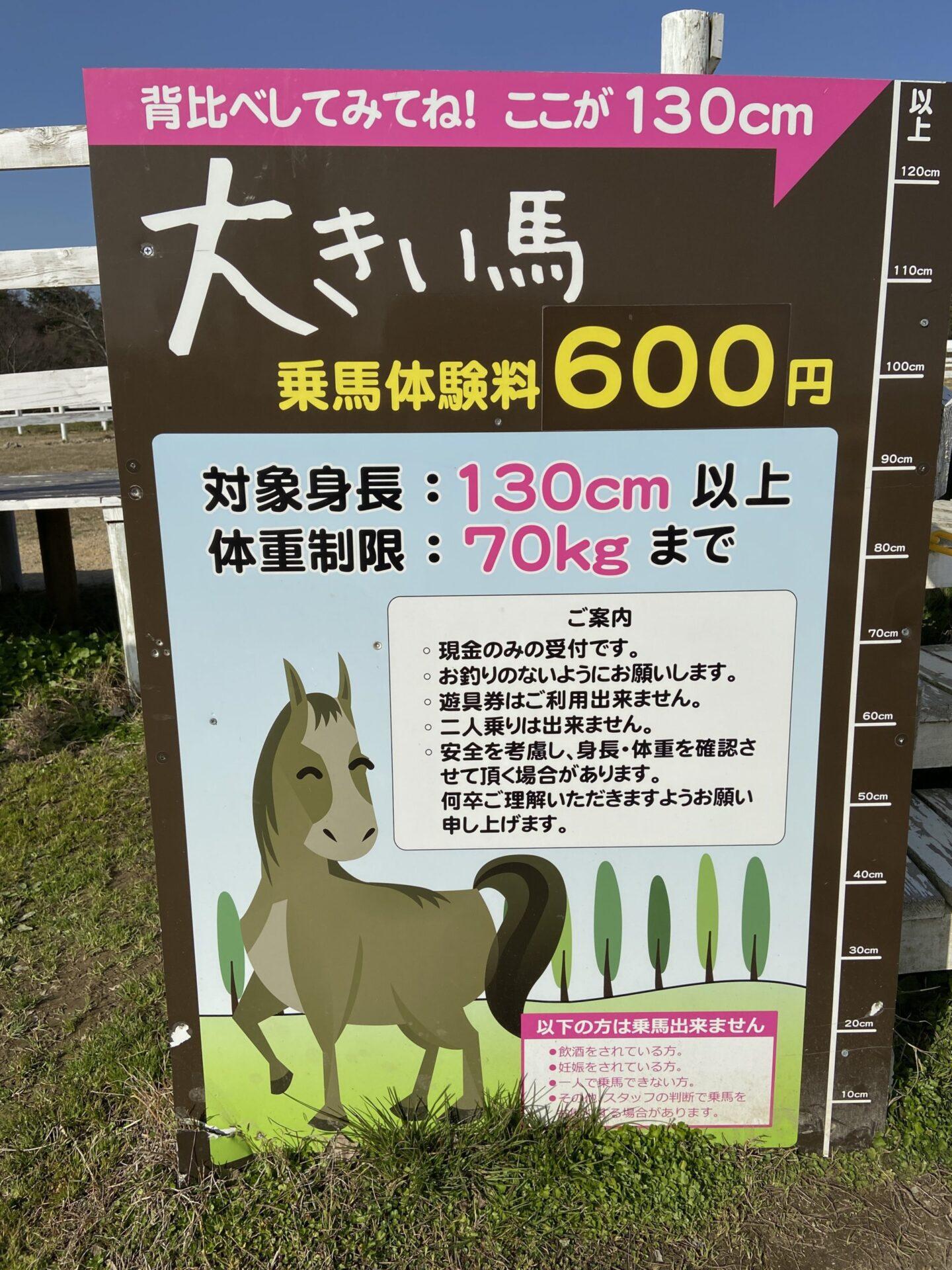 ブルーメの丘 乗馬体験