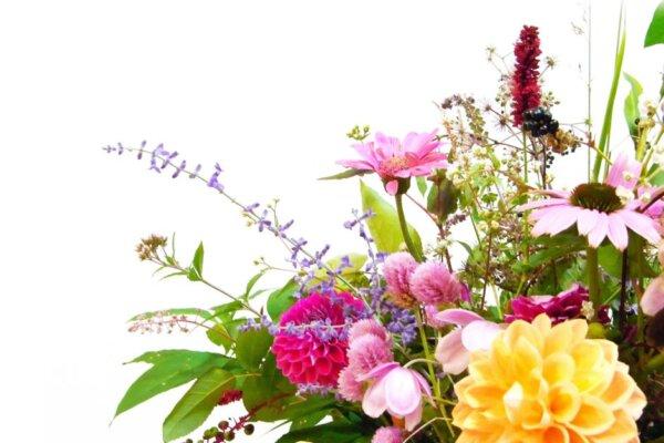 【花のサブスクおすすめ5選】比較表あり!料金(安い順)やコスパで選ぶ人気サービスはコレ!
